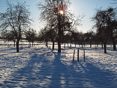 Top-orchard-in-winter.